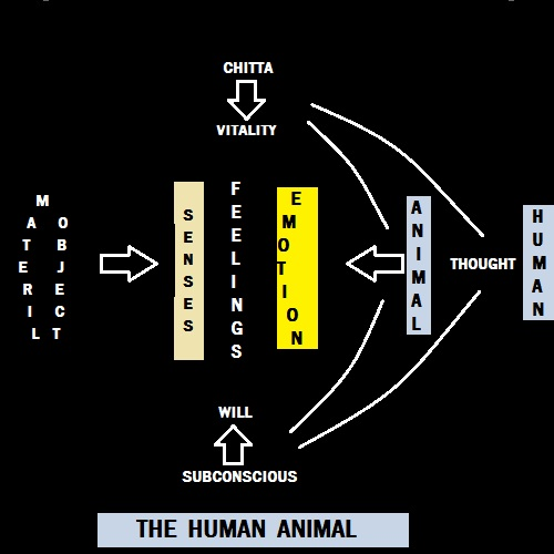 The Human Animal Loop