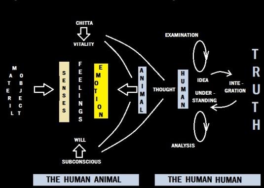 The Human Human Loop